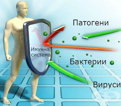 Как работи вашата имунна система