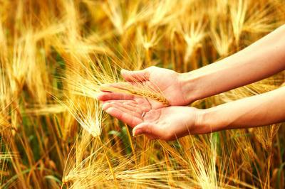 Политици жънат и вършеят в земеделието