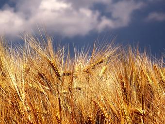 Европейският зърнен пазар експлодира