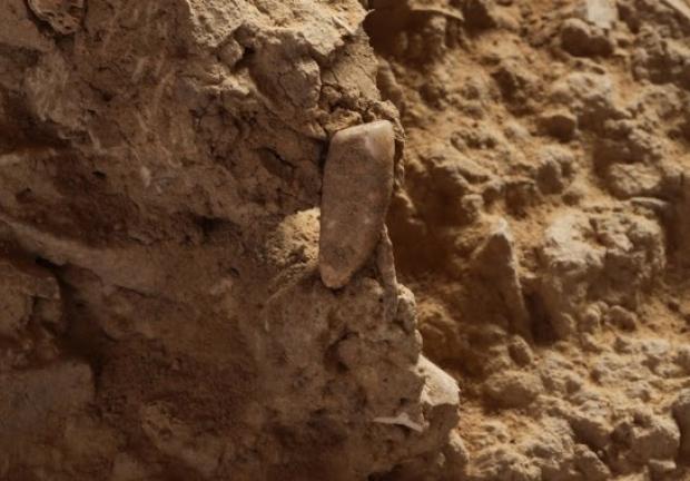 Откритие: зъб на 550 хиляди години