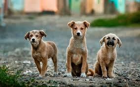 Увеличава се броят на безстопанствените кучета през есента