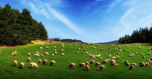 Нов правен капан за фермерите