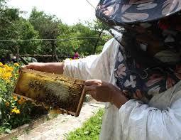 Пръскат срещу комари, но убиват милиони пчели