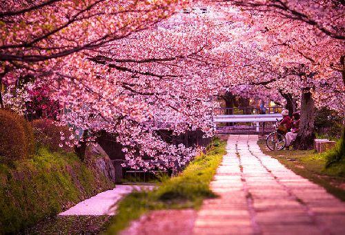 Защо всички се прехласват по Япония