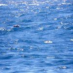 """Корабът """"Героите на арсенала"""" потъна в Черно море"""