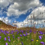 Днес е Еньовден, българският празник на лятото