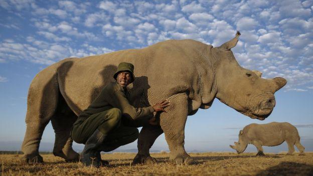 Светът загуби последния роден в дивата природа северен бял носорог