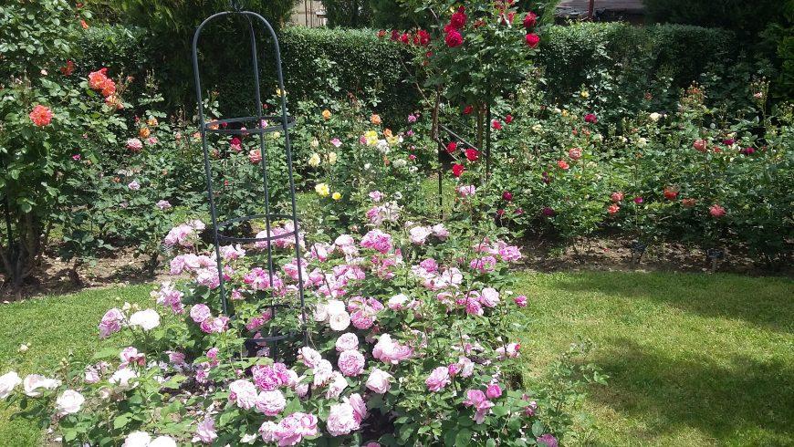 Ботаническата градина в София крие прохлада и изящество