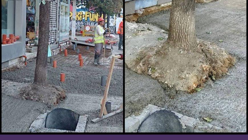 София – градът на бетонираните дървета