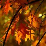 Циганско лято в края на октомври