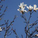 И в София дойде пролетта